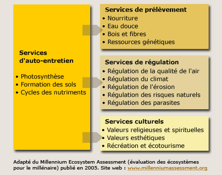 services_ecosys